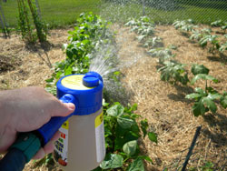 Manure Tea In A Hose-end Sprayer