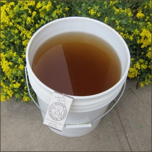Bucket of Manure Tea for plants