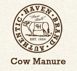 Cow Manure Tea